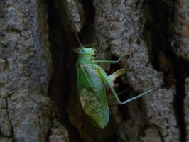 Locust by PUBLIC-DOMAIN-PICS