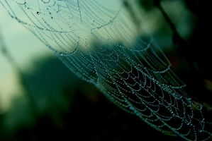 Spider's web by p3kapik