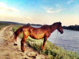 this is a horse. by Methhe