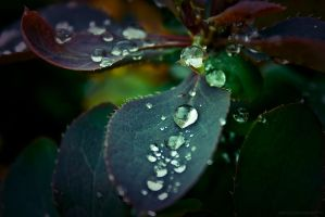 Beautiful Droplets III by JoannaRzeznikowska
