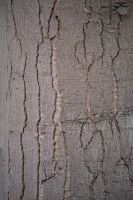 Wooden crack texture by FrankAndCarySTOCK