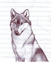 Wolf Sketch from Class by nikkiburr