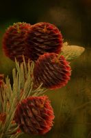 Pine Apples by 3punkins