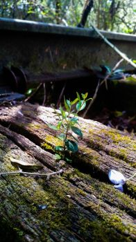 Sprouted Through Old Wood by MossBerg850