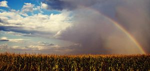 Rural Rainbow by oxecotton