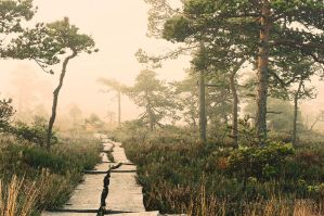 bog trail by vonrubinstein