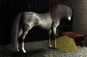 andalusian beauty by MagicWindsStables