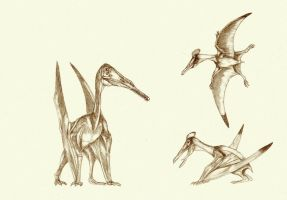 pterosaurs 1 by Kahless28