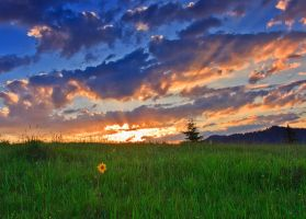 Sunset and one flower by lica20