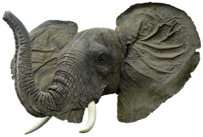 Elephant head png HQ by gd08