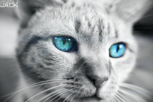 [PhotoManip] Cats can see everything by Jack-GFX