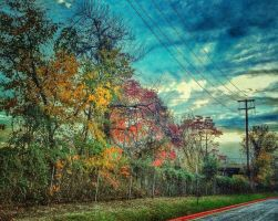 Fall Colors by wdlougee