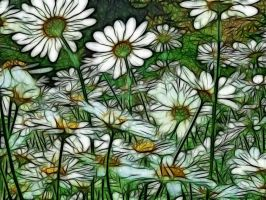 Daisies in the Wind by Bazz-photography