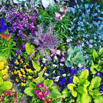 650. colourful flowers by fr33d0m0f3xpr3ss10n