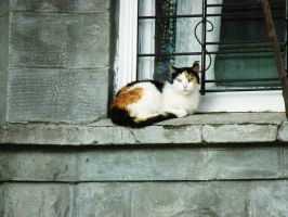 Calico Cat by Opalance