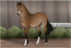 Traaker Import 65 |CUSTOM by BRls-love-is-MY-Live