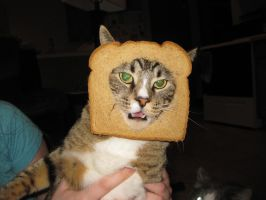 Cat breading by FairyAnts