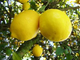 .:stock - lemon 1:. by guavon-stock