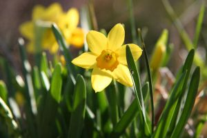 Sunny Spring 2 by WalnutHill