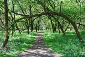 place 15 - spring, wood. by oro-elui-stock