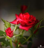 Small and Red by mjohanson