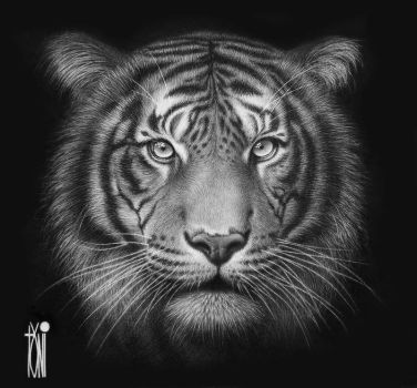 beautiful Tiger by toniart57