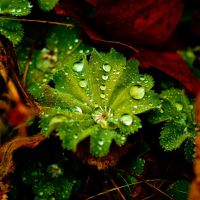 Spiral Droplet Green by NeworldPhoto