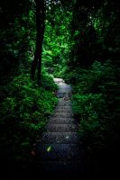 Paths II by Andross01