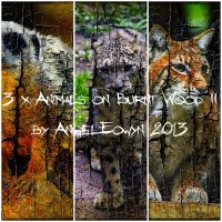 Animals on Burnt Wood Texture Pack 2 by AngelEowyn