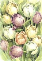 Tulips by zoundsister