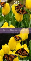 Butterflies n Tulips II Stock by Moonchilde-Stock