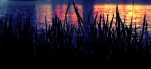 Reeds and Reflections by Sugar-Punch