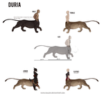 Duria specie concept by Hagon