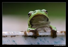 Froggy by IvanAntolic