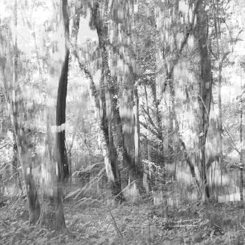 woods lightly by partiallyHere