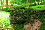 Mossy Stone by ksa-stocks