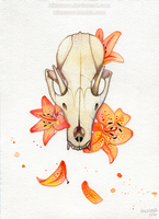 Fox Skull and Lilies by Hikasawr