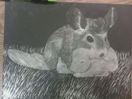 Chinchilla+babies scratchboard by hannah4965