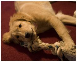 Hailee - Puppy by TINTPhotography