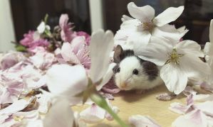 Flower mouse by DreamySilver