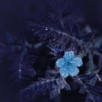 feeling.blue by vicente-oliveira