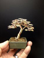 A large 3-color upright wire bonsai tree by Ken To by KenToArt