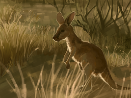 A Joey by FancyPancakes