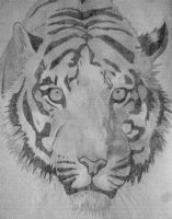 Look into the tigers eyes by bushbasher01