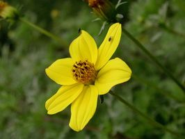 yellow flower by dest-stock