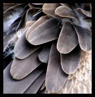 Wings of a Vulture by manic-bassist