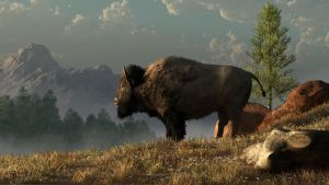 The Great American Bison by deskridge