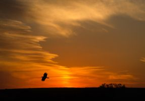 Lonely bird at sunset by rabellogp