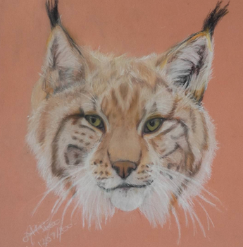 Pastel bobcat by AltheaWorld