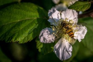Leaf, Flower and Bee by Zeilos